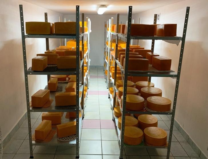 В Новгородской области ОАО «Ермолинское» открыло производство твердых и полутвердых сыров