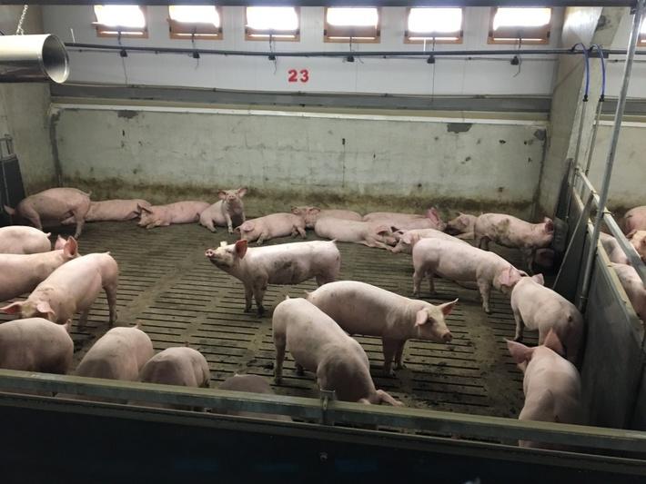 Голова ОДА перевірить законність будівництва свинарника в селі Конюшки