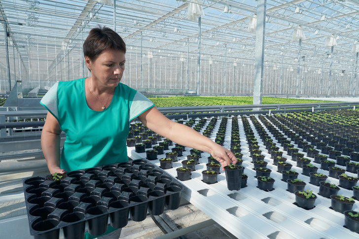 В Калининградской области введен в эксплуатацию новый тепличный комплекс